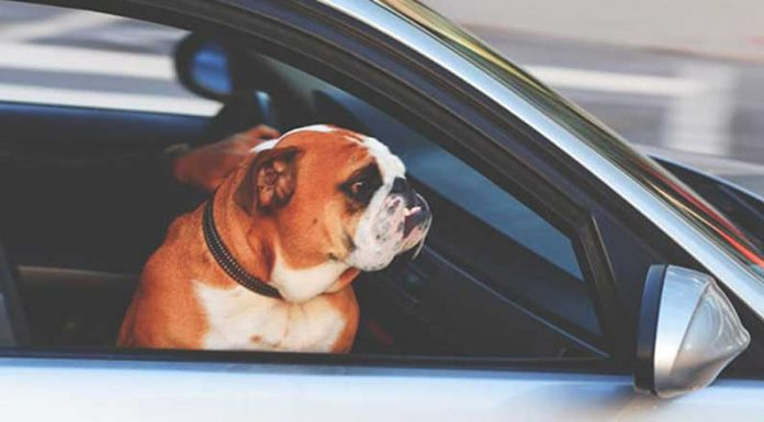 8 cose da fare quando sei imbottigliato nel traffico