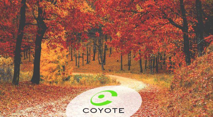 guida sicura, blog, guida autunnale, guida d'autunno